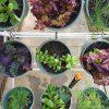 Herb Gardening from Facebook BVVG