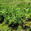 Rivers Edge Garden Center donated six flats of veggies