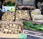 last week's harvest for food pantries