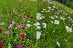 wildflower garden in May and June