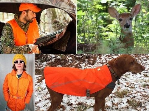 "Post image for Deer hunting season open: Trail hikers encouraged to wear ""Blaze Orange"""
